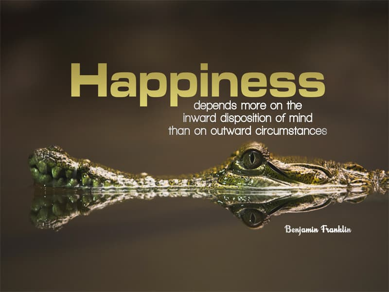 Picture of crocodile with Benjamin Franklin happiness quote