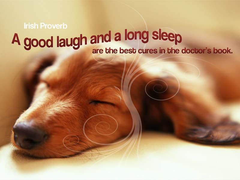 Photo of dog sleeping with irish proverb text - A good laugh and a long sleep are the best cures in the doctors book